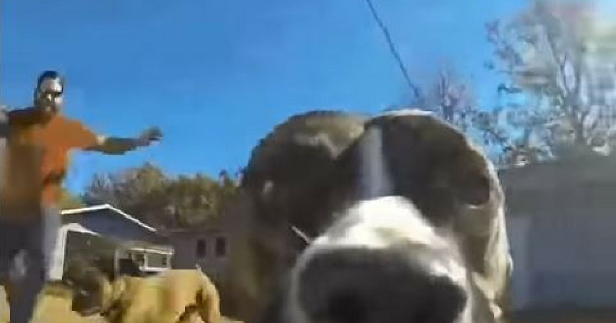 GoPro Captures Witty Dog Running Away From Owners image 1