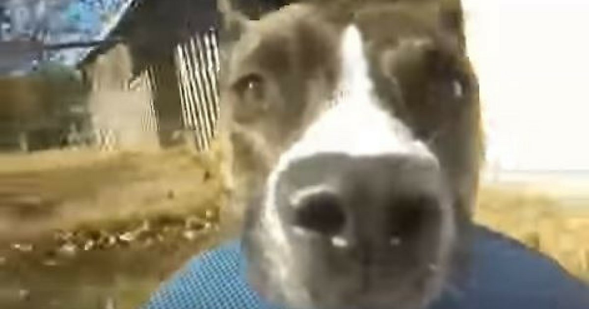 GoPro Captures Witty Dog Running Away From Owners image 2