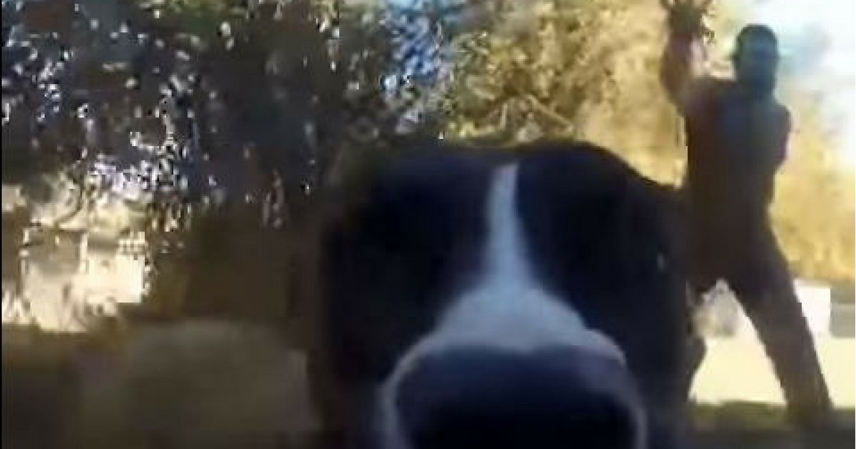 GoPro Captures Witty Dog Running Away From Owners image 3
