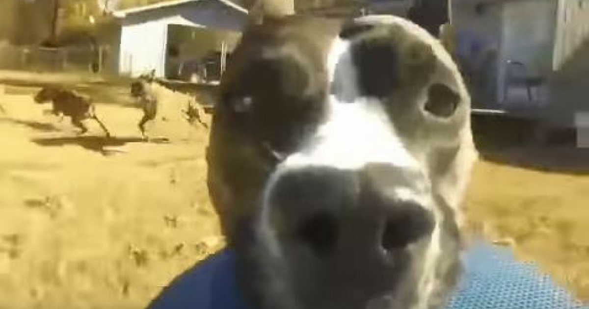 GoPro Captures Witty Dog Running Away From Owners image 4