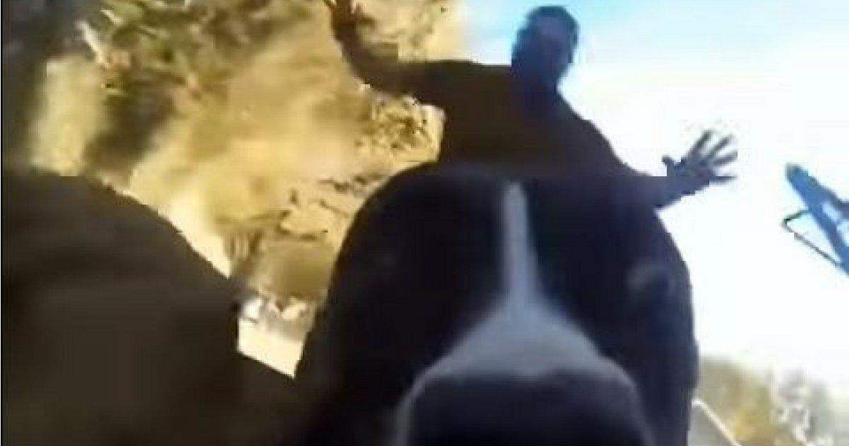 GoPro Captures Witty Dog Running Away From Owners image 5